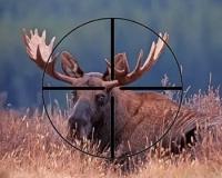 Борьба с браконьерами