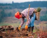 Кто будет восстанавливать леса?