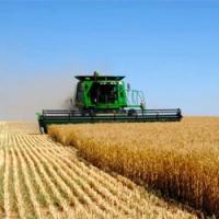 Российский зерновой союз предлагает отменить ЕСХН